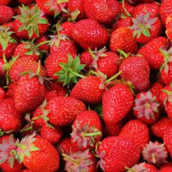 Erdberren